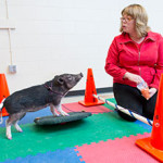 Fizioterapija uz pomoć svinja