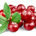 Brusnica – prirodan lek i antibiotik