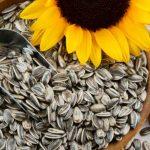 Snizite krvni pritisak semenkama suncokreta