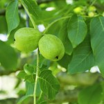 Prirodni recepti za bubuljice i akne