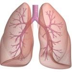 Prirodni lek za tretiranje astme, bronhitisa, kašlja i problema s plućima