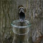 Dar prirode za zdravlje i vitalnost: sok od breze