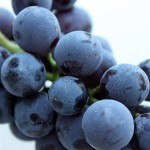 Semenke grožđa uništavju kancerogene ćelije koje su otporne na hemoterapiju