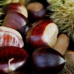 Plodovi pitomog kestena – izvor energije i zdravlja