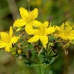Biljke kojima ćete ublažiti stres!