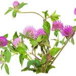Čaj za ublažavanje simptoma menopauze