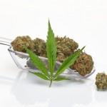 Marihuana do kraja godine legalna u Srbiji