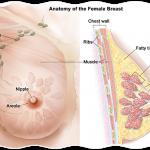 Ciste na dojkama simptomi i prirodno lečenje