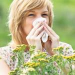 AMBROZIJA JE U PUNOM JEKU: Zaštitite se čajem koji možete da napravite od biljaka iz vaše bašte!
