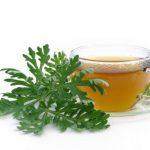 Čaj od pelina savršen za zdravlje želudca