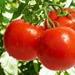 Šta sve paradajz čini za vaš organizam