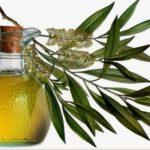 Zdravstvene prednosti eukaliptusovog lista