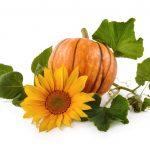 Bundeva- Boginja jeseni i zdravlja