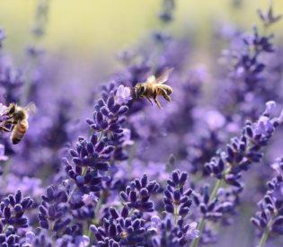 Lečenje aromaterapijom