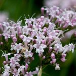 Ove biljke su savršene za očuvanje zdravlja