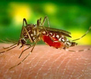 Evo načina da  se rešite komaraca