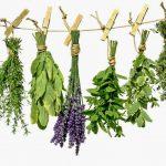 Ove biljke su odlične za vaše zdravlje