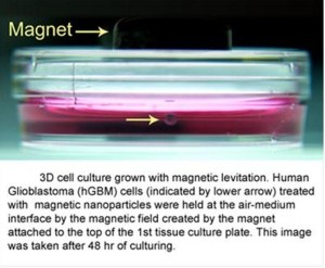 3D_Cell_Culturing_by_Magnetic_Levitation_Introduction_Picture