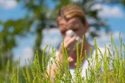 polenska_alergija_i_kako_se_zastititi_v1