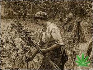 Theopensource-MagicWeedTheHistoryOfMarijuana_flv_mp3732-846
